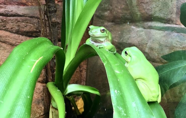 grenouilles-wild-life-zoo.jpg