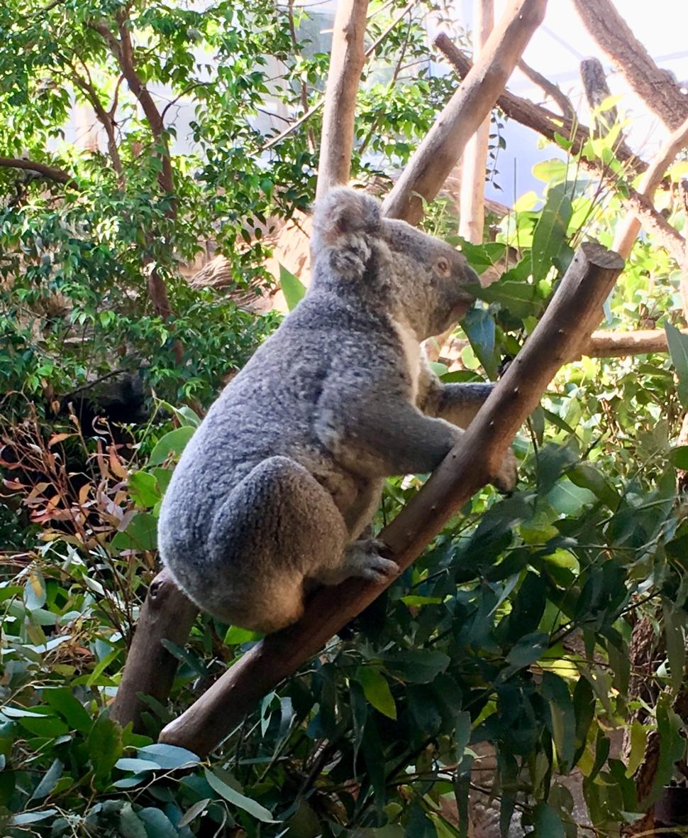 Koala Wild Life Zoo