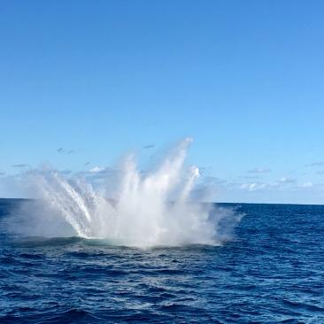 baleines a sydney 2