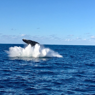 baleines a sydney 4