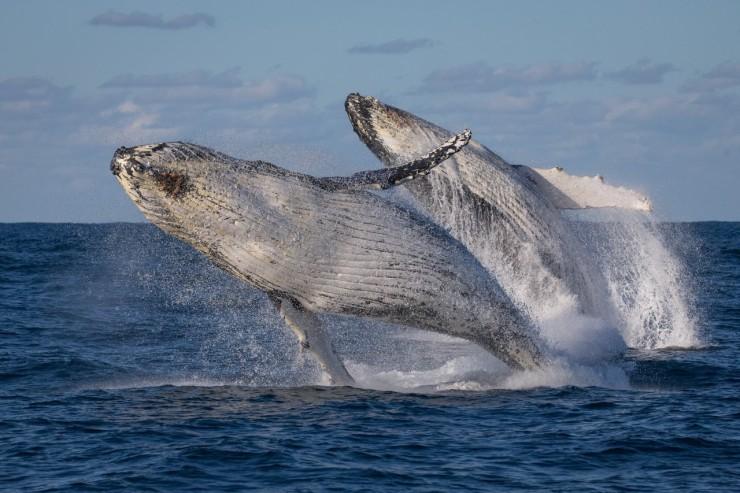 Baleines a Sydney