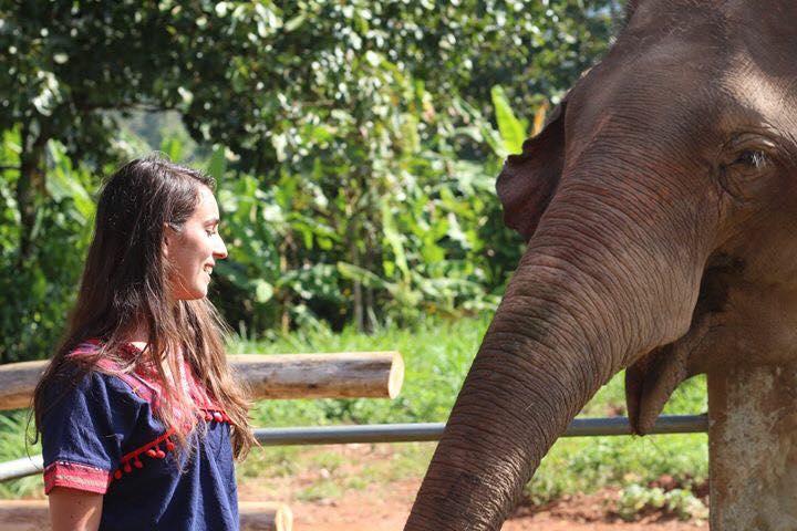 asie thailande elephant nature park