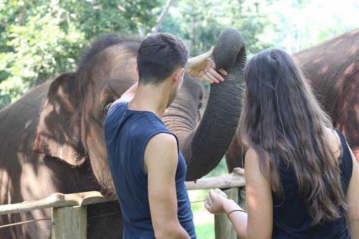 éléphants asie thailande