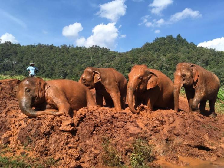 elephant bain boue thailande asie