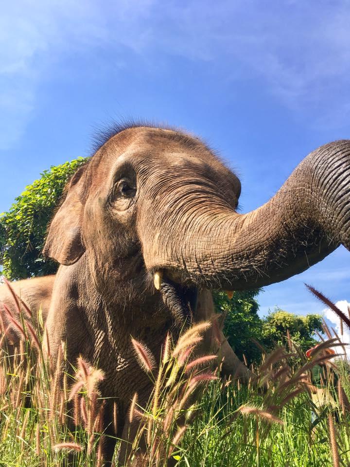 elephant thailande asie